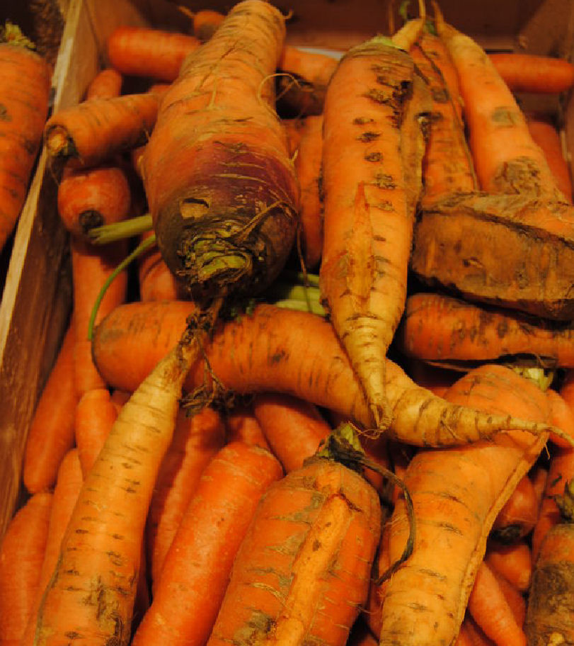 carottes biscornues