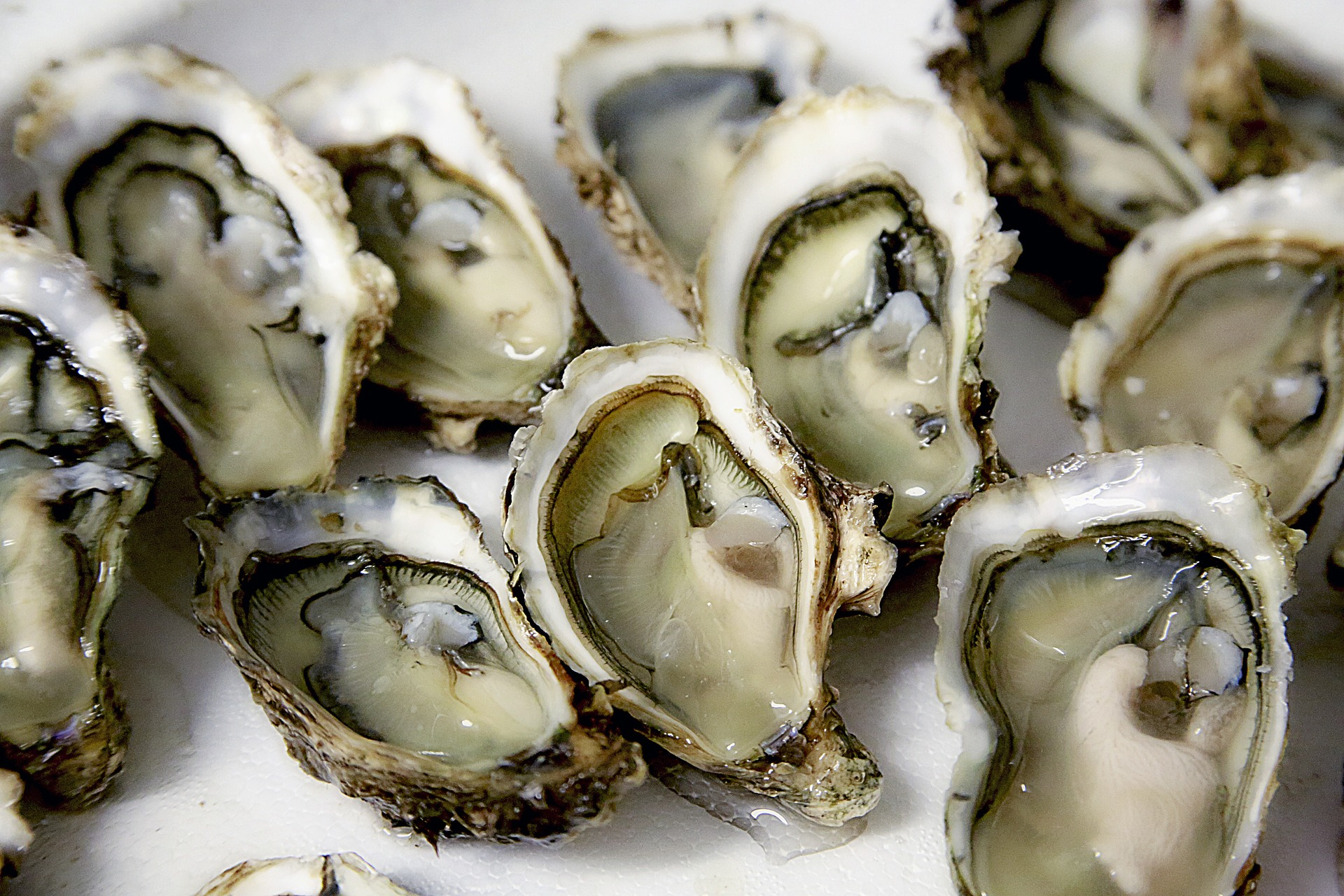 oyster-huître